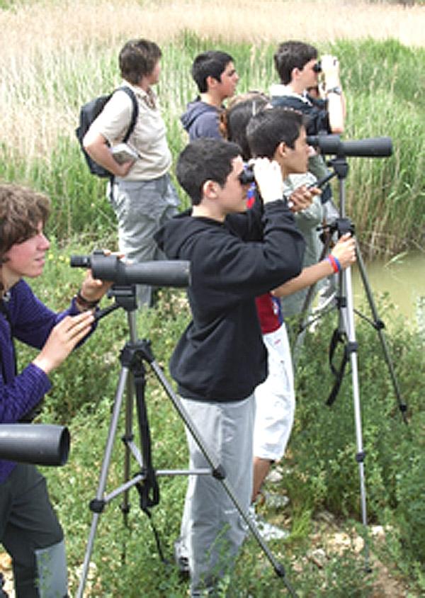Actividad escolar para estudias las aves